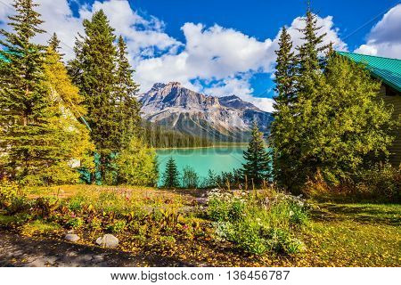 Blossoming glade in coniferous forest. Beautiful autumn day on the Emerald Lake. Rocky Mountains, British Columbia