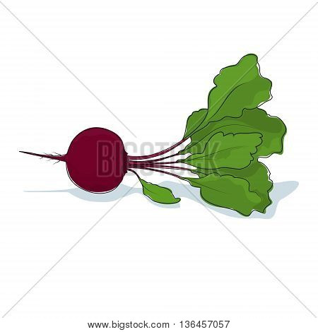Beetroot, Beet Root Vegetable on White Background, Vector Illustration