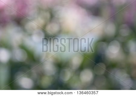vivid bokeh in soft color style for background. romant