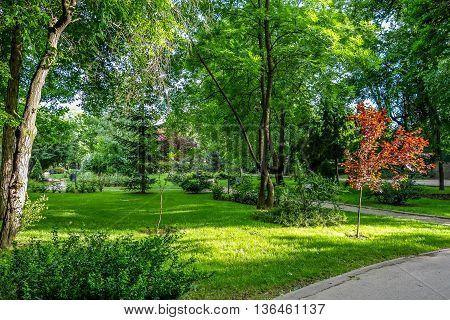 Spring green vegetation in Kiseleff Park, Bucharest