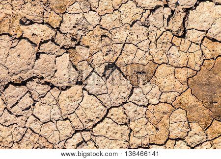 Cracked Ground Texture