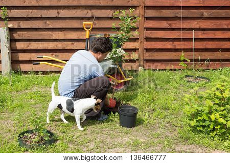man with dog plants a cherry in the garden