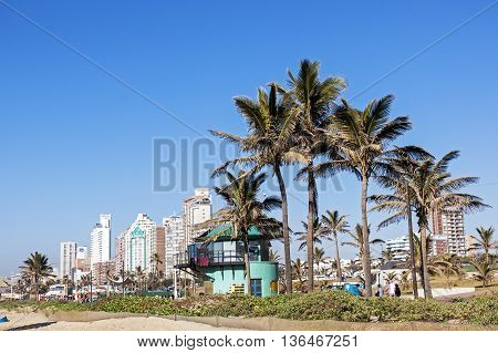 People Walk  Promenade Behind  Palm Trees Against City Skyline