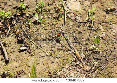 red ladybug sits on a grass leaf