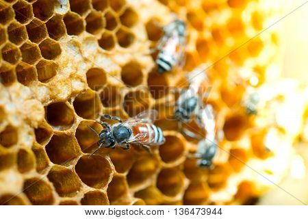 Close up view of the working bees on honeycomb and selective focus