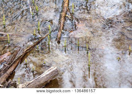 A little woodland pond in Western Finland.