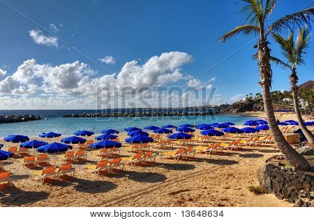 Canary Island Beach And Palm
