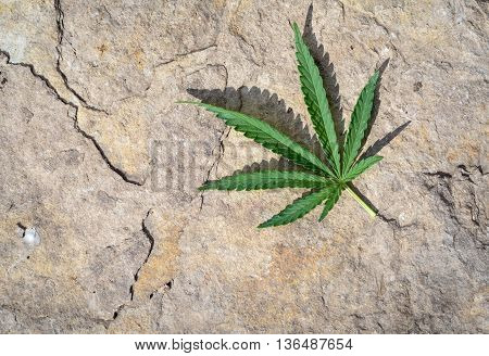 Single Cannabis Leaf And Stone Background