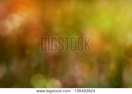 Blurred scene of spring meadow with flowers