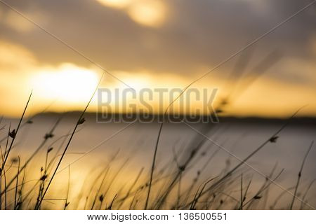 Nature Landscape With Plants On Summer Sunset
