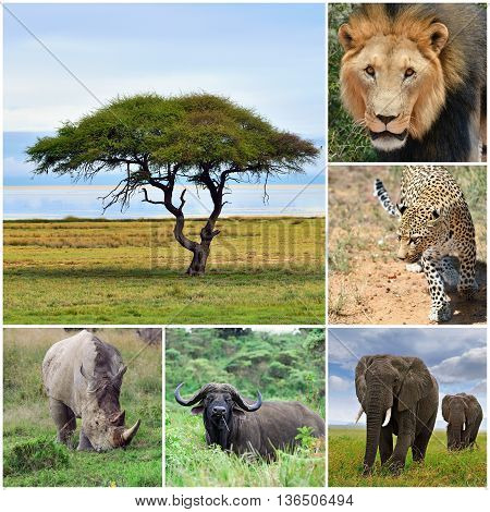 The Big five african animal collage Africa.