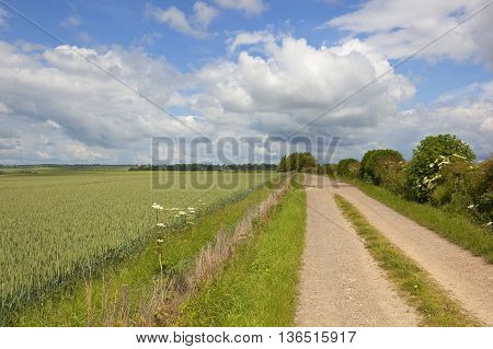 Farm Track With Wheat Field