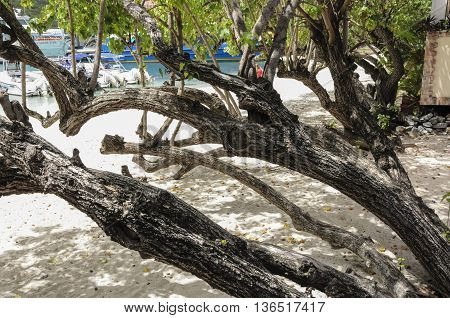 Branches of a tree leaning over a white beach on St. John island.