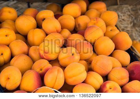 Apricots For Sale