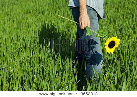 Young Man Standing With A Sunflower In The Green Field