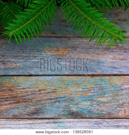 green prickly branches of a fir against the background of old wooden planks selective focus. background copy space