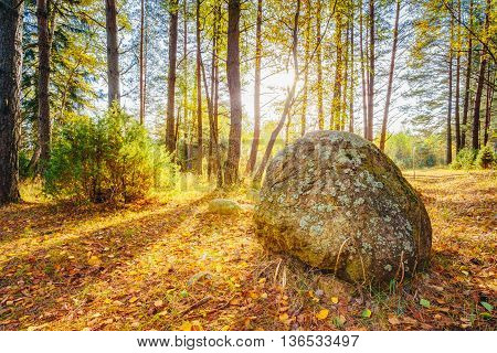 Sunset Sunrise Over Ancient Stones, Boulders From The Ice Age In Beautiful Wild Autumn Forest. The Berezinsky Biosphere Reserve