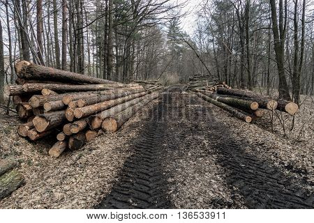 Logging industry pile of several tree trunks