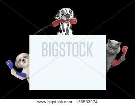 Animals -- dogs and cat -- with phones and frame with space for text -- isolated on black