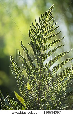 Fern Leaf On Green Forest Scenery Environment