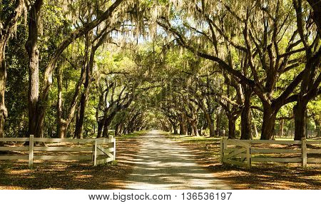 A fence welcomes you to view the large oak trees on a plantation in Georgia.