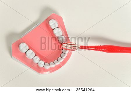 dental jaw and toothbrush, dental care concept.