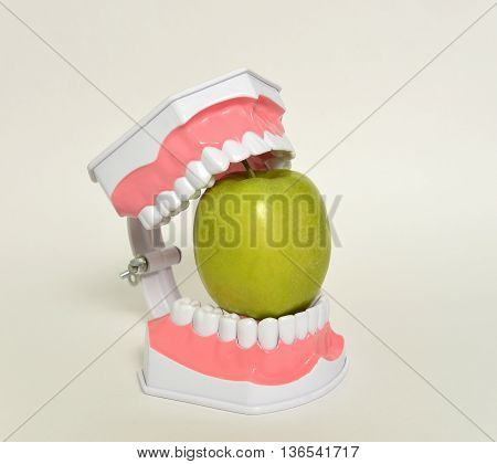 dental jaw and green apple, dental care concept.