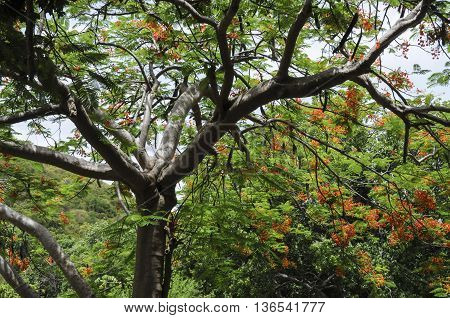 A tree in a forest on St. John island.