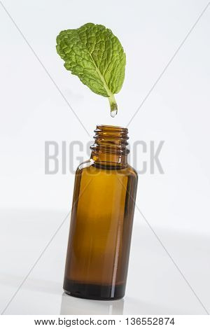 symbol picture of extracting the essential oil Peppermint