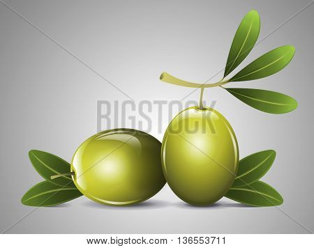 Two fresh olive with leafs and branch
