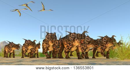 Einiosaurus Dinosaurs 3D Illustration - Quetzalcoatlus flying reptiles fly over a herd of Einiosaurus dinosaurs during the Cretaceous Period.