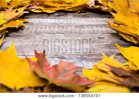 Autumn wooden natural background with maple yellow leaves, empty space for text
