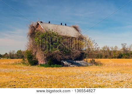 Creepy, abandoned house overgrown with vegetation and vultures perched on roof line.