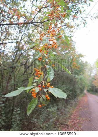 Fall at Poplar Creek Forest Preserve in Hoffman Estates, Illinois