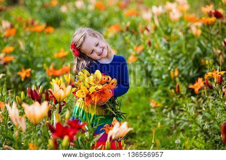 Cute little girl picking lily flowers in blooming summer garden. Child holding lilies bouquet in beautiful flower field. Kid gardening. Lilly plants in flower bed. Preschooler smells picked blossoms.