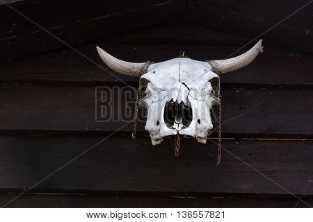 Aged cow skull hanging on wooden post