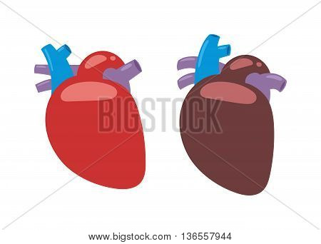 Human heart anatomy isolated on white vector illustration. Anatomy body human heart biology science aorta. Human heart cardiology, healthcare atrium system healthy physiology symbol.