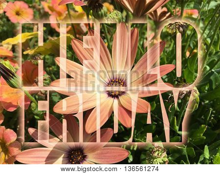 Hello Friday word on nature flowers background