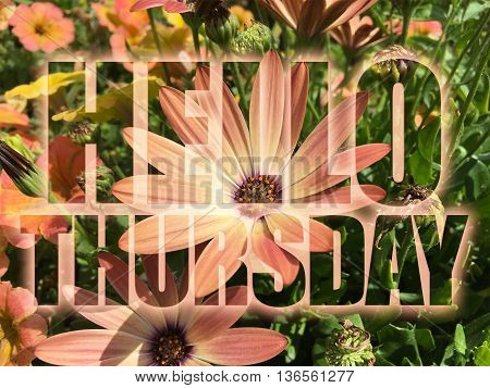 Hello Thursday word on nature flowers background