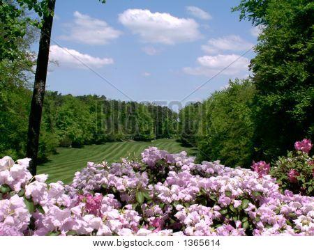 Springtime On Woodlawn Golf Course