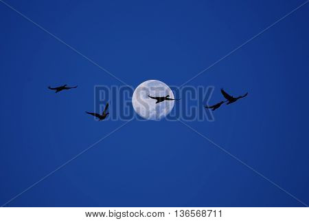 Birds fly over the moon concept of leadership teamwork and competition