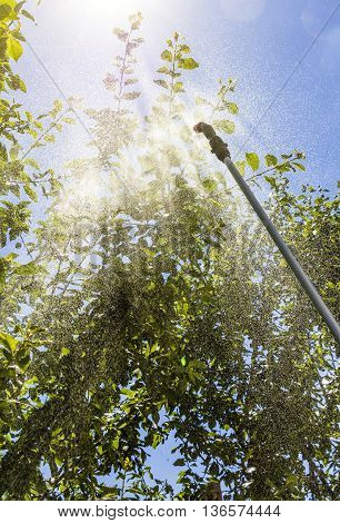 Spraying the leaves of trees against pests with chemicals