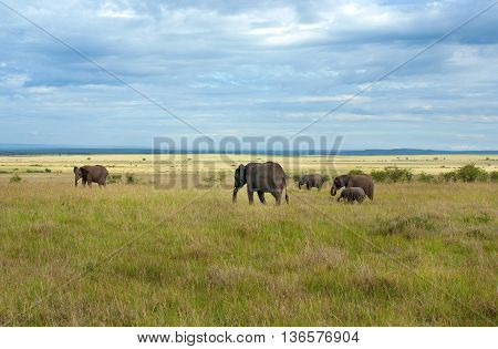 Elephants In Maasai Mara National Park, Kenya.
