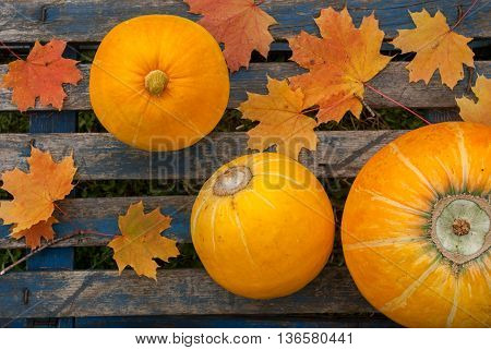 Three ripe yellow pumpkins and maple leaves on blue table