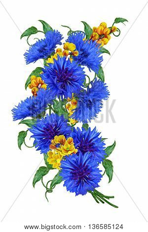 Flower composition. Bouquet of blue cornflowers and yellow barberry. Isolated white background.