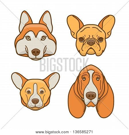 Dog faces of various breeds: basset hound husky corgi french bulldog
