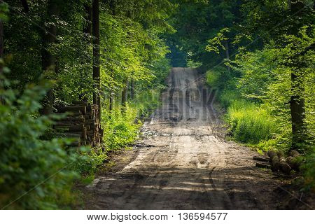 Sandy Forest Road At Summer