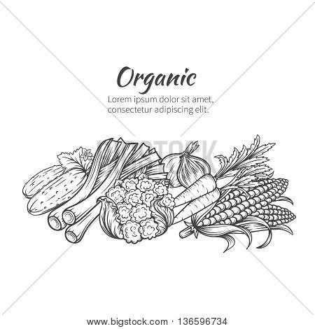 Hand drawn vegetables banner with cucumber, onion, cabbage, carrots, corn. Vector illustration vegetables in old ink style.