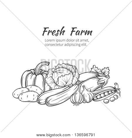 Hand drawn vegetables banner with pumpkin, potatoes, cabbage, zucchini, eggplant, garlic, peas. Vector illustration vegetables in old ink style.