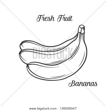 Hand drawn bananas icon. Vector illustration  bananas in old ink style. For brochures, banner, restaurant menu and market